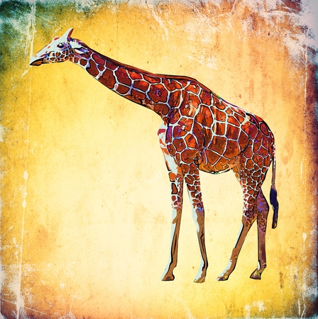 Giraffe vintage art illustration