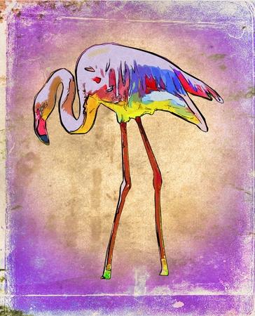 ornithological: Pelican vintage art illustration Stock Photo