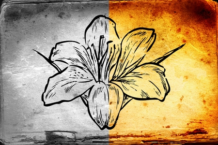 article: flower illustration on different background Stock Photo