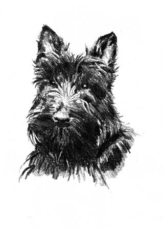 Funny dog ??art illustration