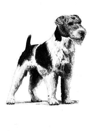 mongrel: Funny dog ??art illustration