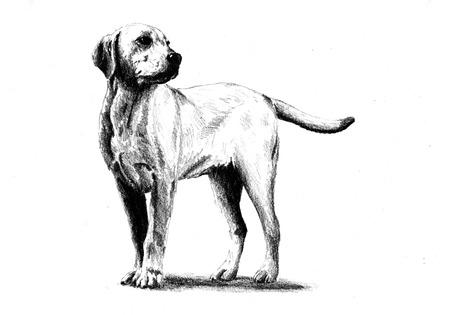 lap dog: Funny dog ??art illustration