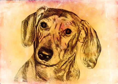 Funny dog ??illustration on vintage background