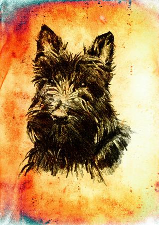 lap dog: Funny dog ??illustration on vintage background