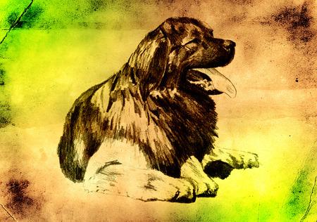 lap dog: Funny dog ??art illustration on vintage background