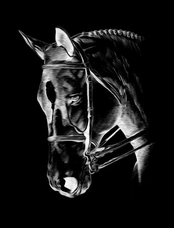 Freehand horse head pencil drawing negative black Stock Photo