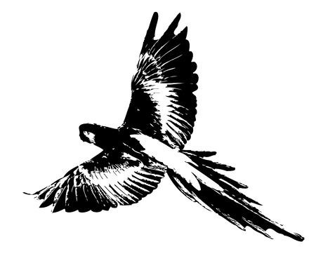 tree isolated: Bird art illustration