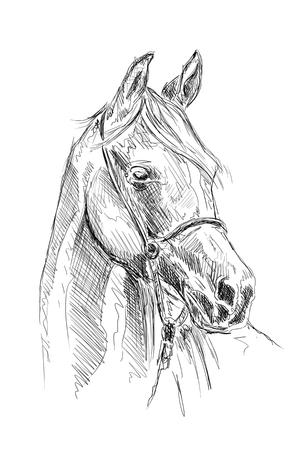 Cheval freehand crayon de dessin tête Banque d'images - 81871545