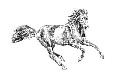 Cheval freehand crayon de dessin tête Banque d'images - 81871589