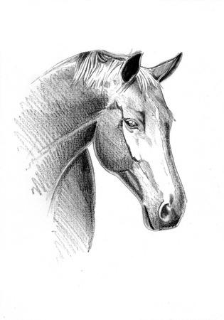 Cheval freehand crayon de dessin tête Banque d'images - 82668448