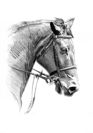 Caballo de dibujos a mano lápiz de la cabeza Foto de archivo - 82668451