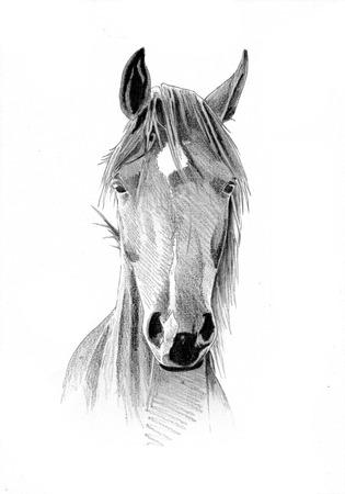 uit de vrije hand paard hoofd potloodtekening
