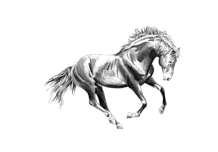 freehand horse head pencil drawing