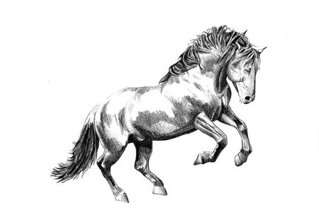 フリーハンド馬頭鉛筆画
