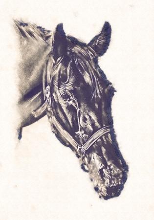 Cheval freehand crayon de dessin tête Banque d'images - 86870032