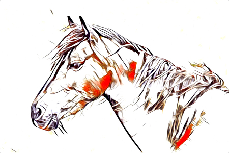 freehand horse art illustration paint Stock Photo