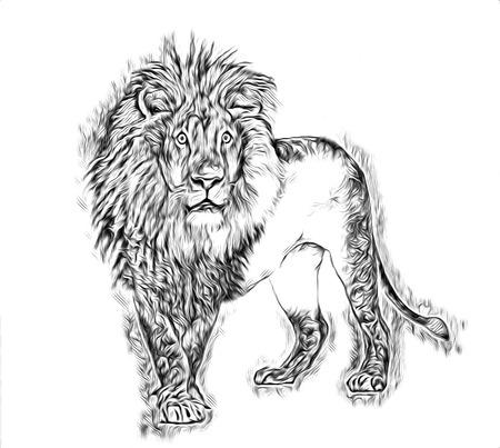 lion art illustration drawing Stock Photo