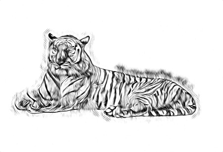 tiger art illustration drawing