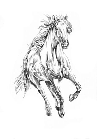 Freehand horse head art