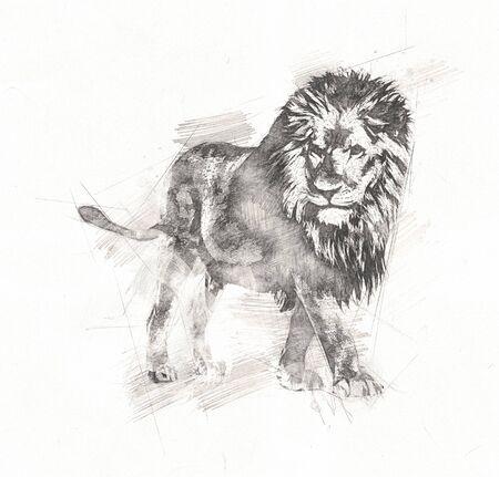 Lion art drawing on white Stockfoto