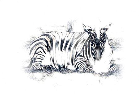Drawing of Zebra, sketch of african mammal illustration Standard-Bild