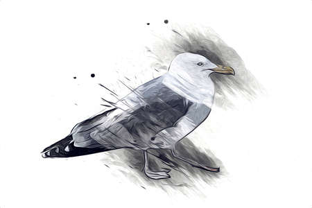 Atlantic white seabird fly at sky. Beach seagull. Sea birds, gull cartoon art illustration