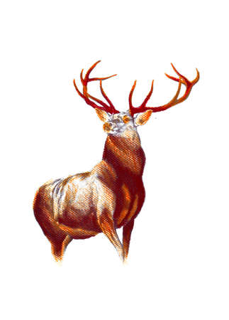 antique stag art drawing handmade nature Banco de Imagens
