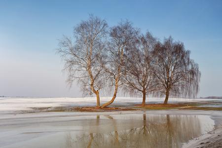 trees sky: Early Spring near Minsk