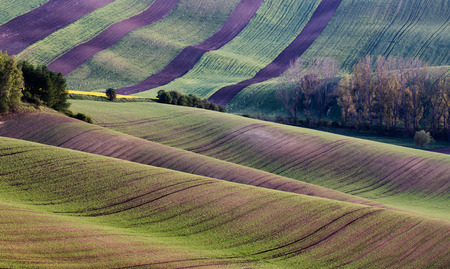 hillsides: Moravia hillsides Stock Photo