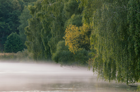 svisloch: Foggy Morning on the river