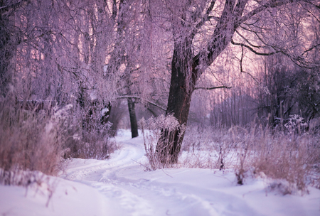 svisloch: Winter Morning in Belarus. January near Minsk. Stock Photo