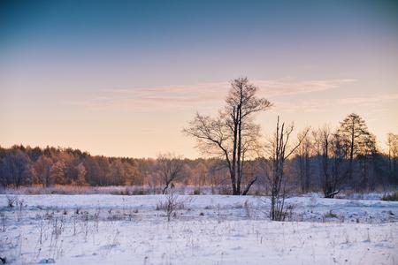 winter sunrise: Winter dawn in Belarus. Sunrise in winter morning. Snow landscape