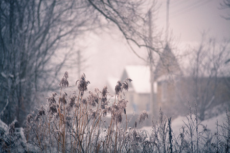 laconic: Snow and winter. Belarus village, countryside in winter