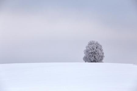 belarus: Lone tree in winter field. Belarus Stock Photo