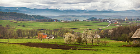 Blooming trees in spring carpathian mountains. Snow and green fields