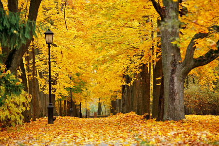 Autumn October colorful park. Foliage trees alley in park Stock Photo