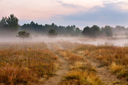riverbank: Foggy dirt road at summer morning riverbank. Misty dawn at summer season. Misty morning on a meadow.
