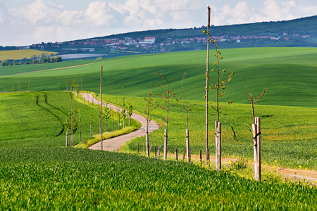 Road in spring green fields. Green agriculture crop. Spring hills and fields of South Moravia. Town on a hill Stock Photo