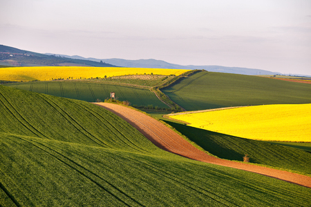Sunny Spring farmland on hills of South Moravia. Czech green and yellow spring fields. Rural agriculture scene Stock Photo
