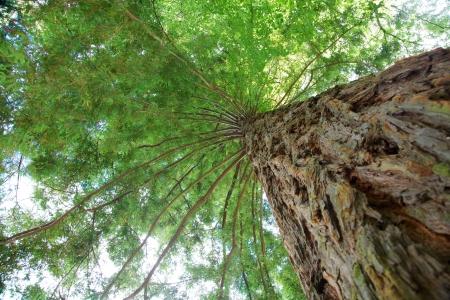 Green Treetop Standard-Bild