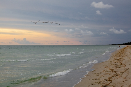Pelicans after Sunset