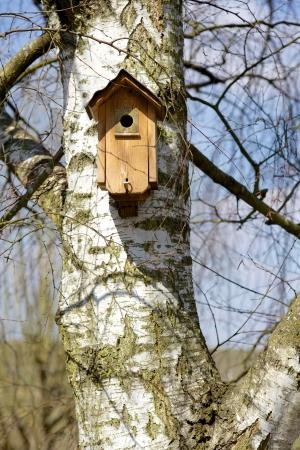 Birdhouse on a Birch Tree Standard-Bild