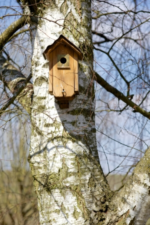 Birdhouse on a Birch Tree Stock Photo