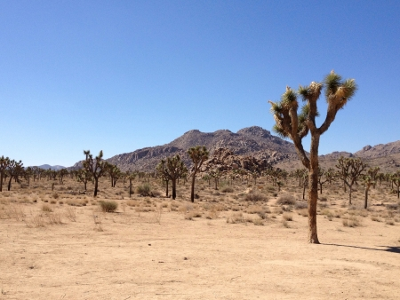 The Joshua Tree National Park Stock Photo