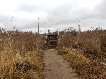 among: Old stairs among reed