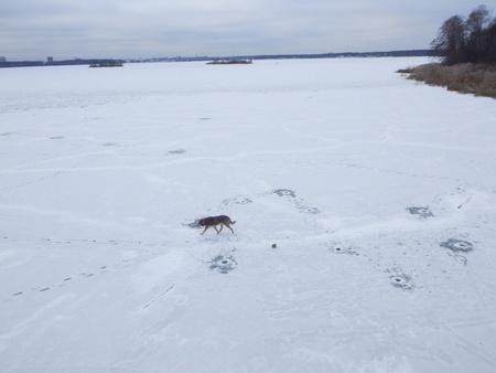 december: Dog on frozen lake in December