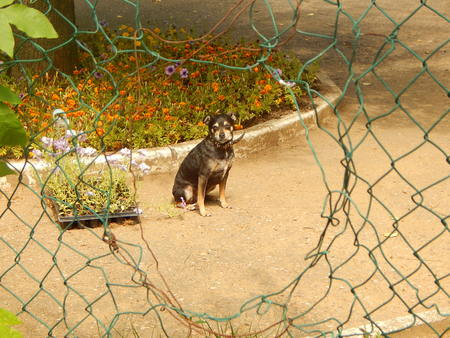 Dog behind the fence