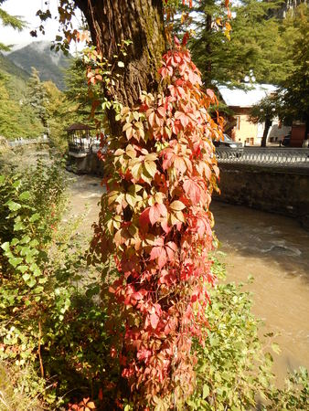 Tree with loach Stock Photo