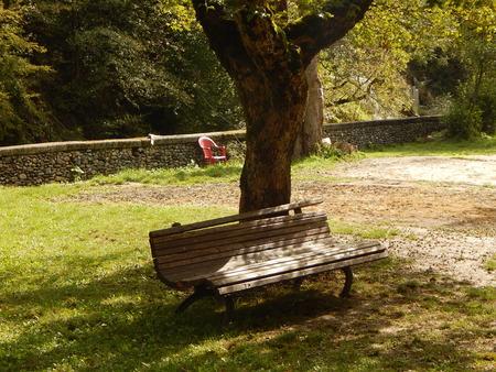under a tree: Cozy bench under a tree