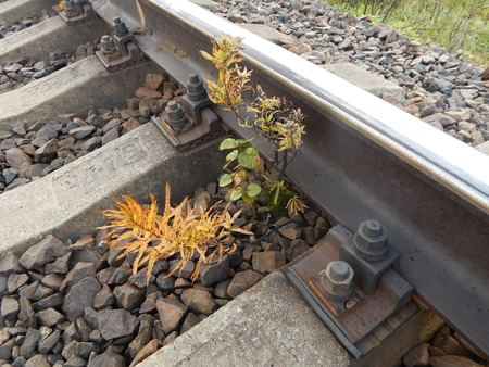 against all odds: The plant is among the sleepers